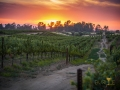 another-sunset-in-wine-country