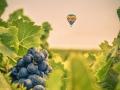 fog-vineyard6