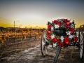 temecula_wine_country_xmas